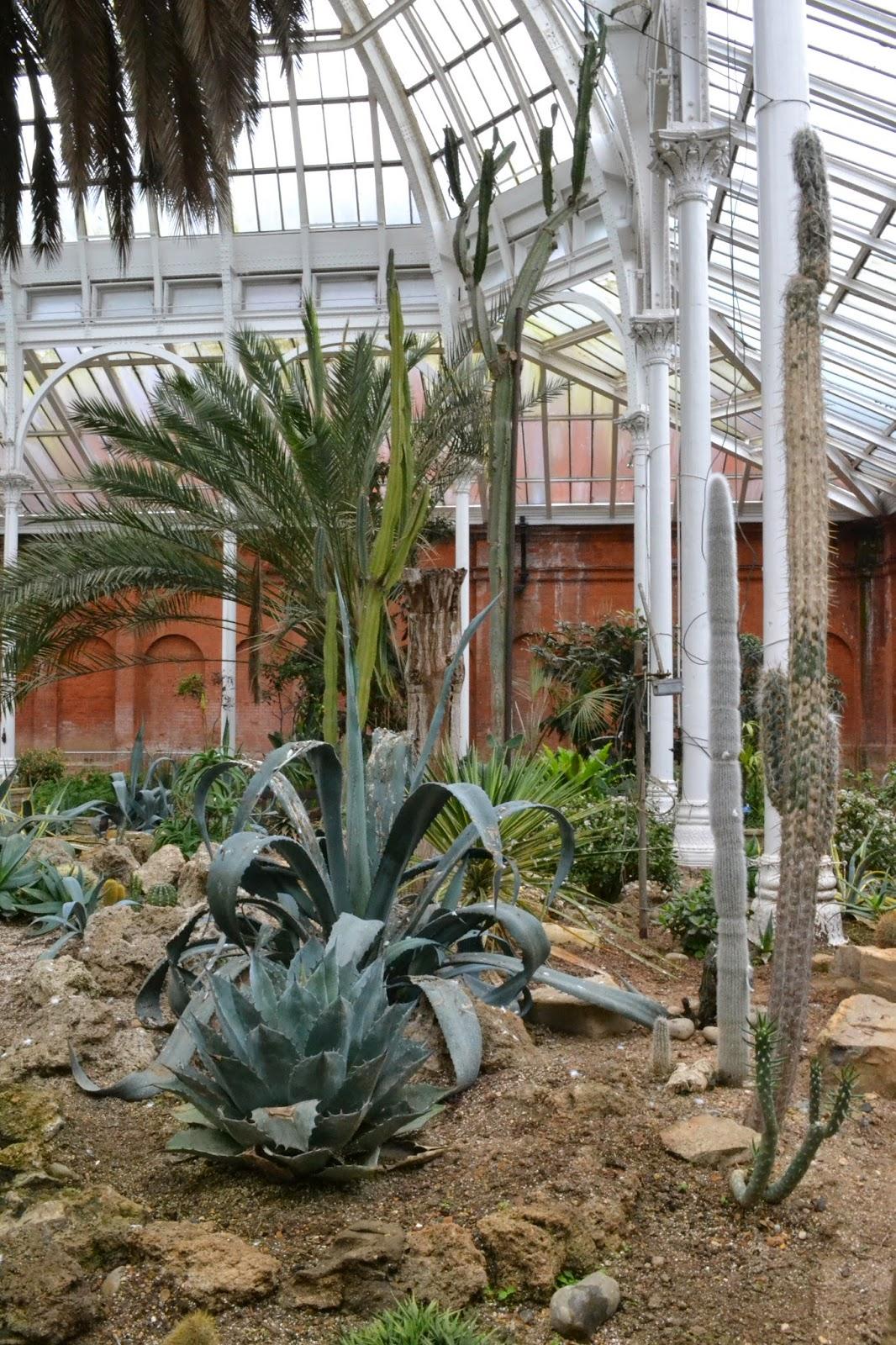 cacti and aloe vera