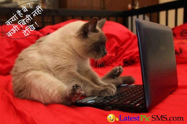 cat funny hindi quotes pics