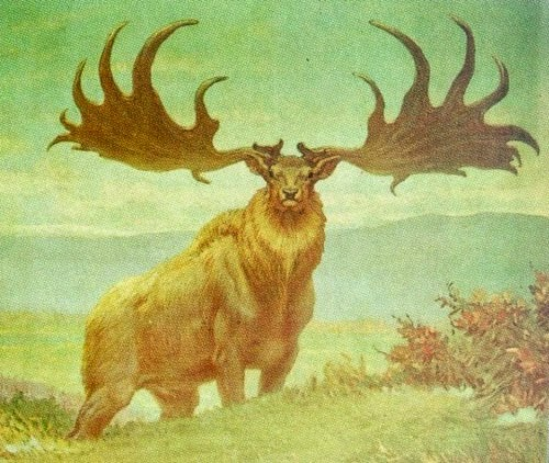 Irish Elks