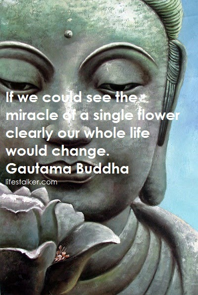 buddha quotes life flower magic