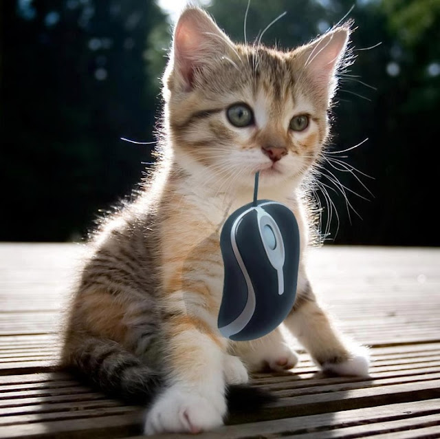 Small Kitty got the mouse