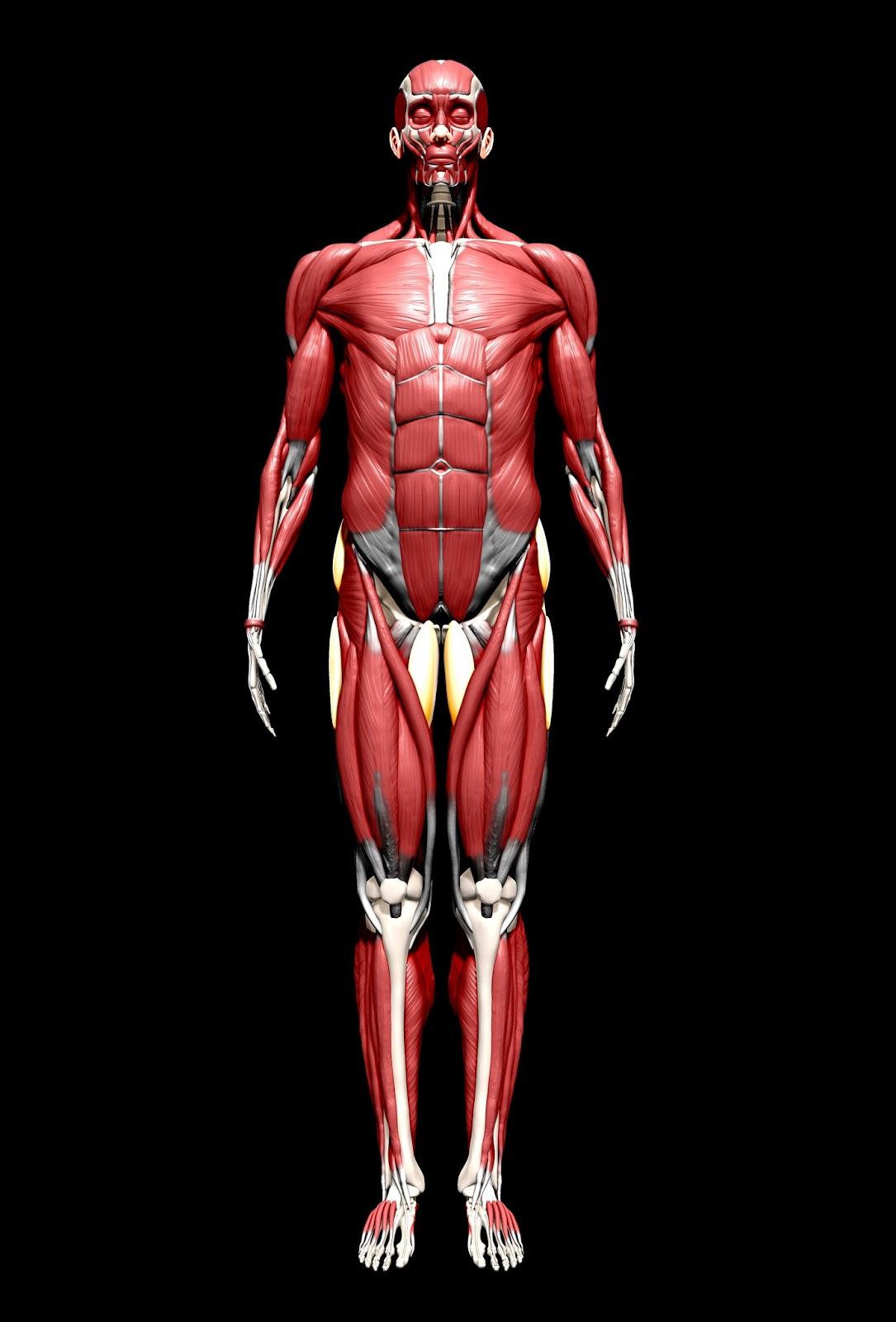 Hopen's blog: Human Anatomy!