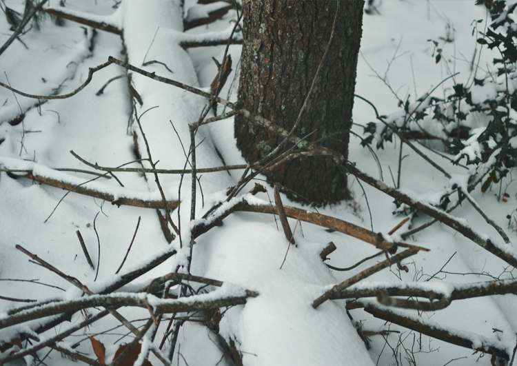 The Flying Clubhouse: Birds in the Snow | woods