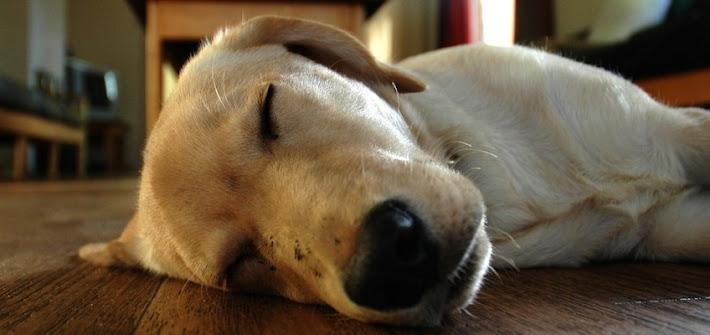 Muore il cane, proprietario risarcito per danni morali