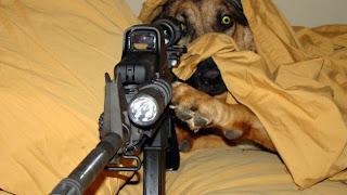 perro mata hombre disparo