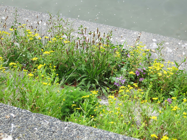 Plants by freshwater lake.