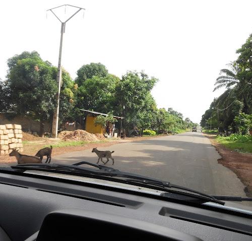 Voluntário na Guiné-Bissau 13: A Edite e a Rosário ao volante
