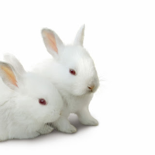 All About Animal Wildlife: Cute White Rabbit HD Wallpapers ...