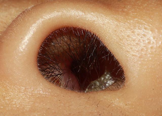 Makro lubang hidung