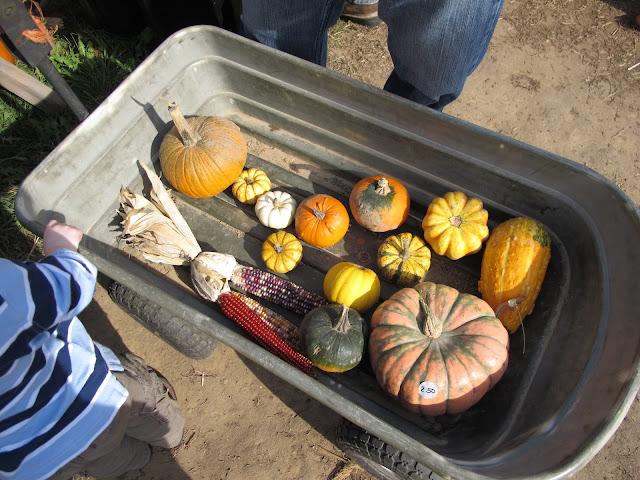 Porter's Pumpkins & Gourds