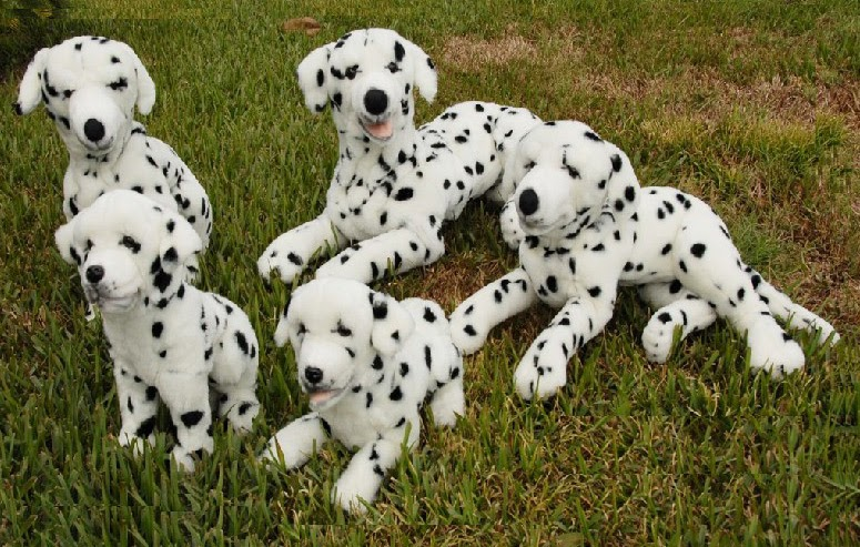 Dalmatians Dogs For Sale