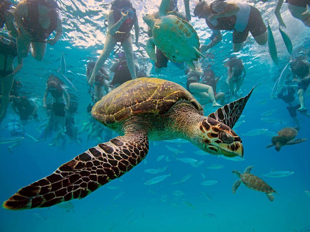 Http King Animal Blogspot Com 2012 07 Turtle Html