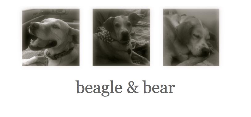 beagle & bear