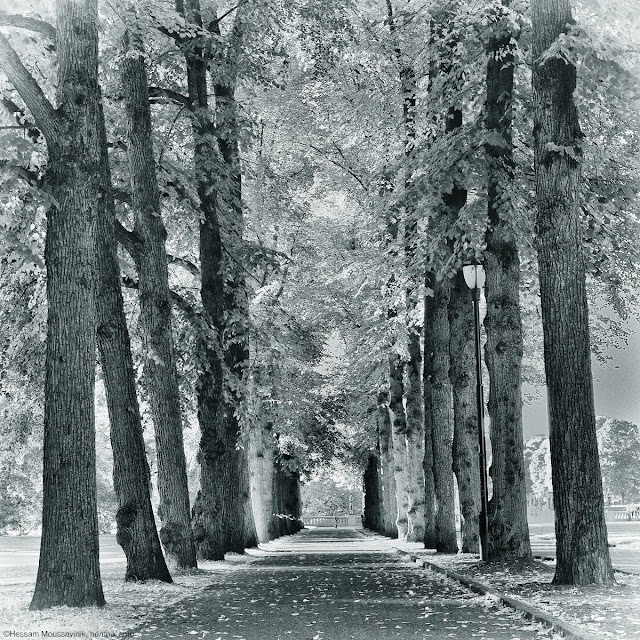 A photo of a tree tunnel taken in Frogner park, Oslo
