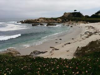 Harbor seals with pups on a beach, Pacifc Grove, California