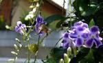 lindas flores  foto do medina nota 10