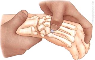 С бугорка основания пятой пястной кости мы можем перейти на в радиальную сторону на соседний бугорок основания четвертой пястной кости.