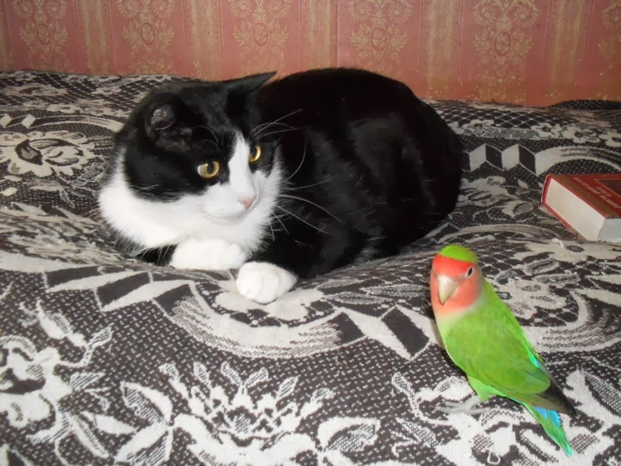 Sweet Friendship of Cats and Parrots