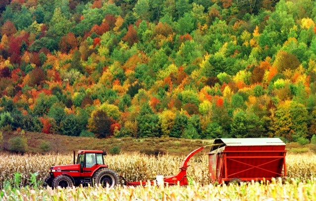 In this October 1998 file photo, a farmer chops corn in front of a hillside of color in Richmond, Vt.  (Credit: AP Photo/Toby Talbot) Click to enlarge.