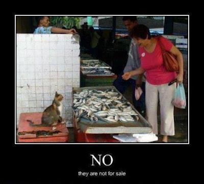 Menurut Kalian Ikan ini di jual Gak hayo ma Penjualnya..!