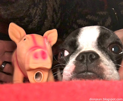 Sinead poses side by side with her pig toy