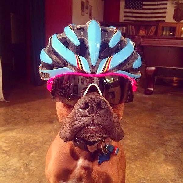 El Perro Ciclista