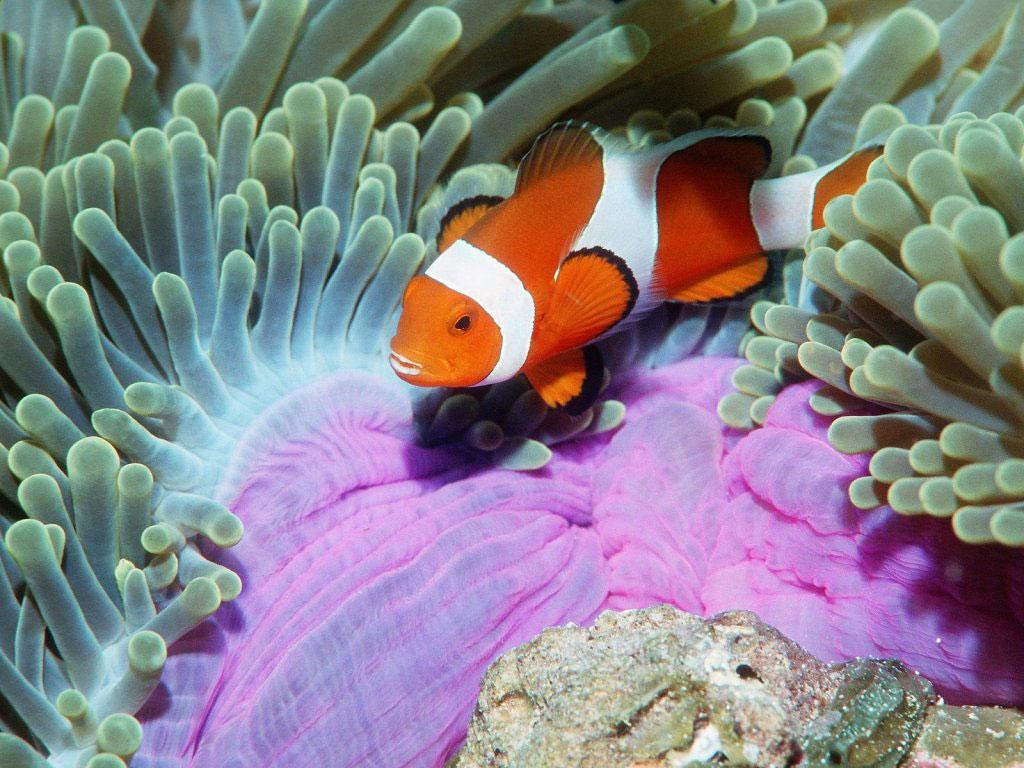 http://1.bp.blogspot.com/-SZA-995cgYk/TaCDehxaxaI/AAAAAAAAAGo/pns6d35cS0Y/s1600/peixinho-entre-os-corais-6d98a.jpg