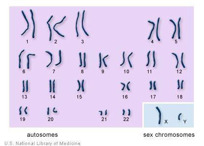 chromosomes.jpg