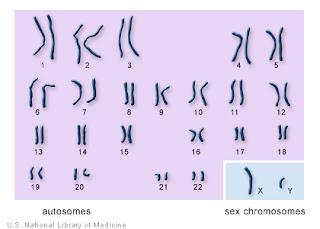 [Image: chromosomes.jpg]