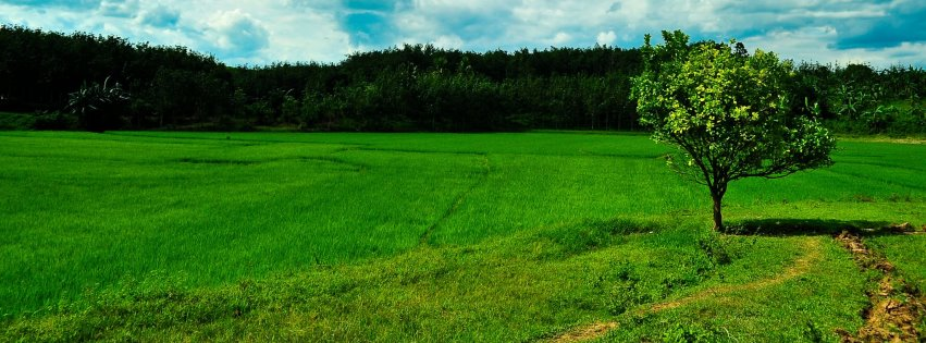 Orman ve yeşillik kapak resimleri