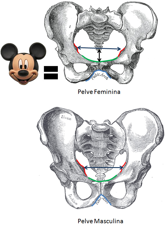 pelve+masculina+e+feminina.jpg
