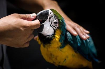 Phòng và chữa bệnh cho chim cảnh (toàn tập)