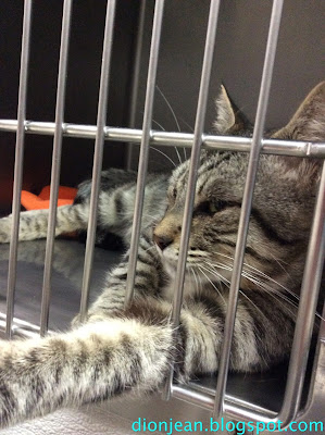 Squeak the cat doesn't love his shelter kennel