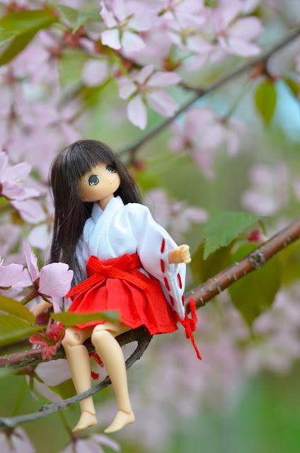 koron ja kirsikkapuu