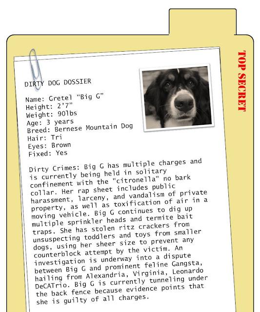 dossier template microsoft word