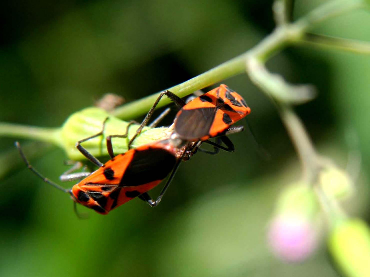 Insects R Gone Living with Nat...