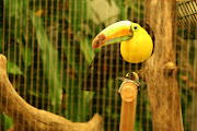 zoo animals in cages Pictures & Photos