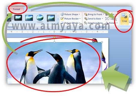 Gambar:  Cara melakukan cropping / memotong gambar di powerpoint