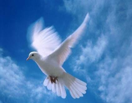 La Paloma Blanca - A White Dove