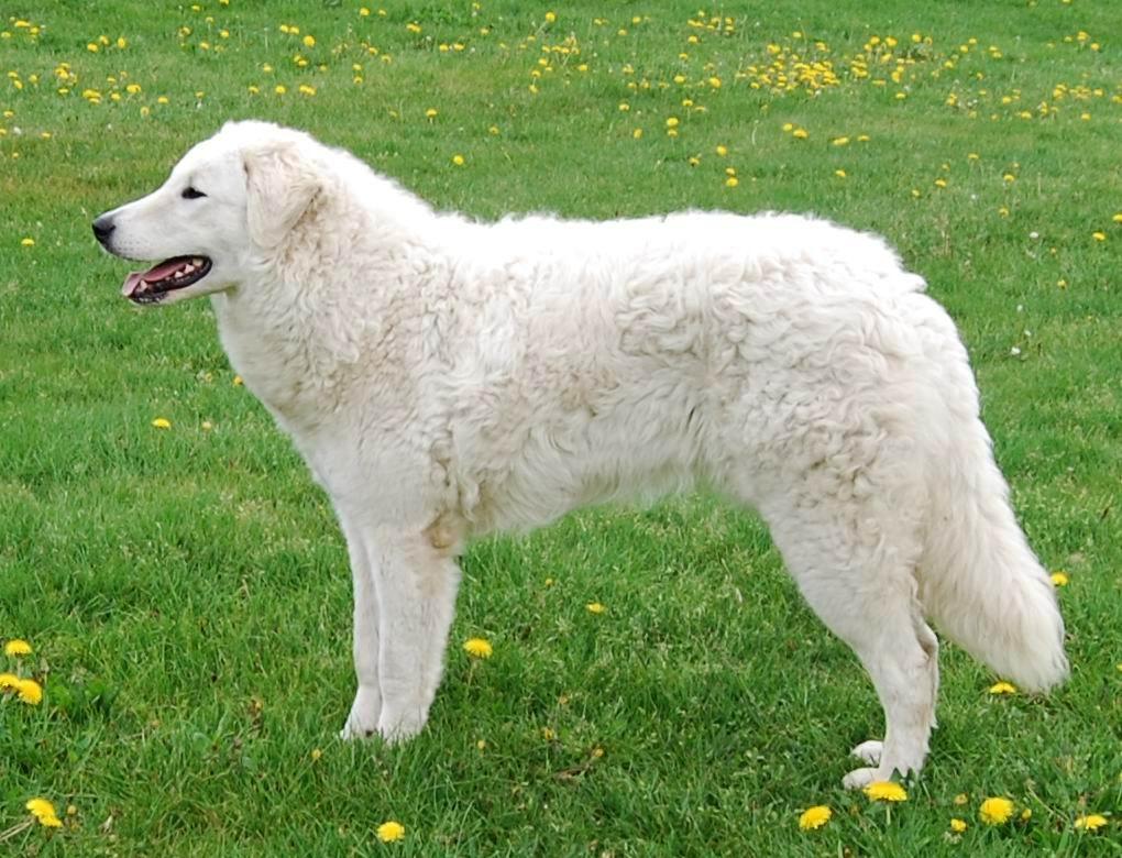 world u0026 39 s best protective dog breeds