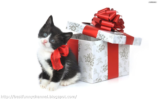 Kitten and Christmas box.
