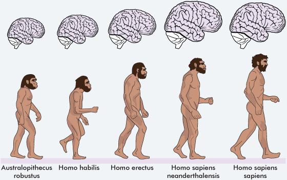 Future Homosapiens - Rocktasm