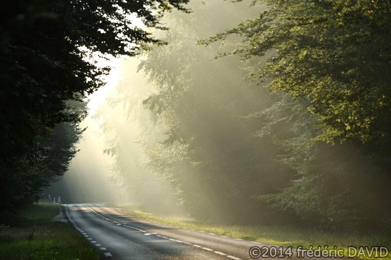 route lumière matin brume forêt Fontainebleau Seine-et-Marne
