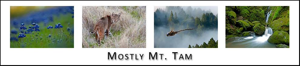 Mt. Tam Blog