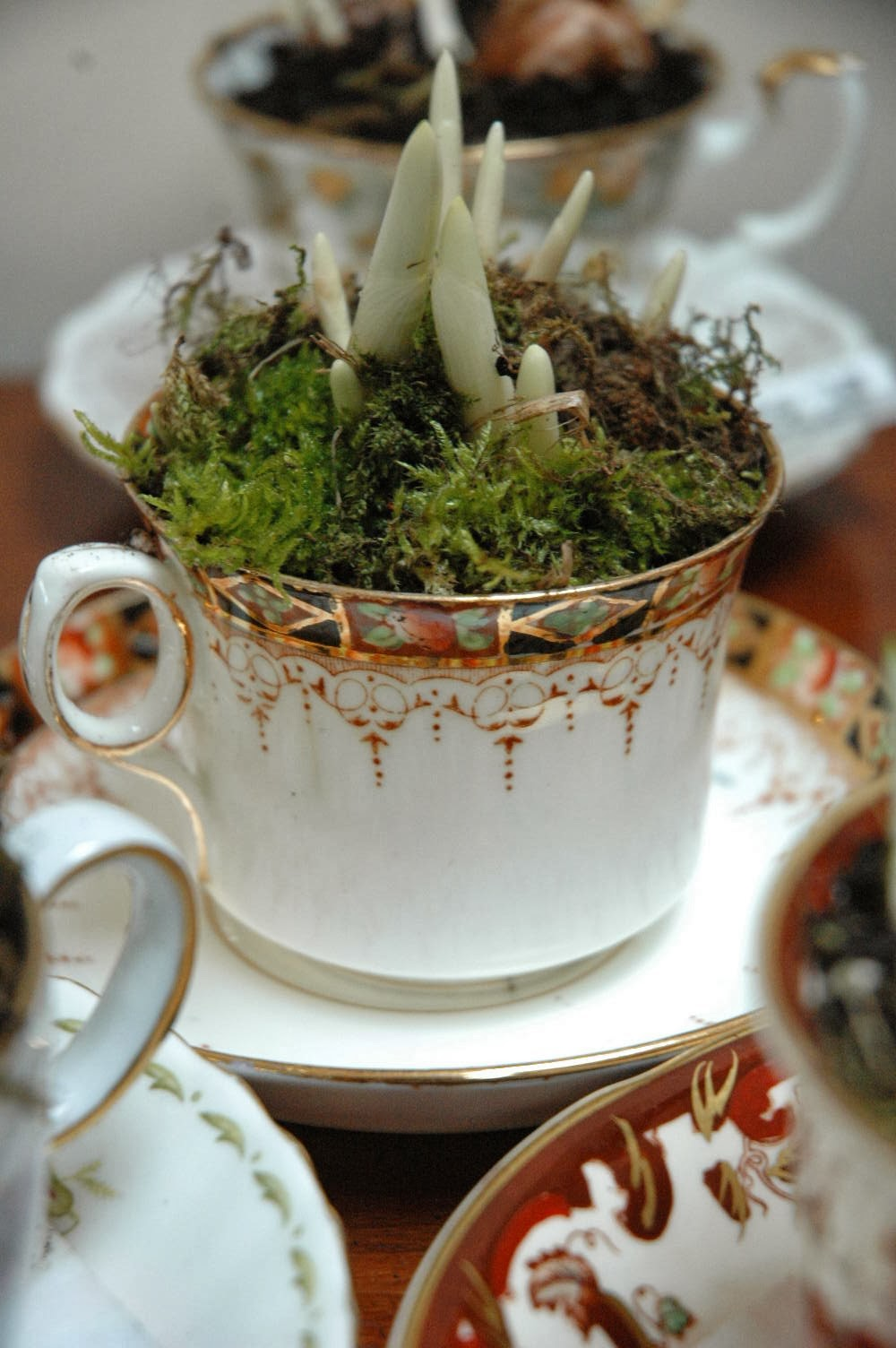 An old imari teacup is now a planter for purple 'Flower Record' crocuses.