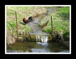 Spring fed creek