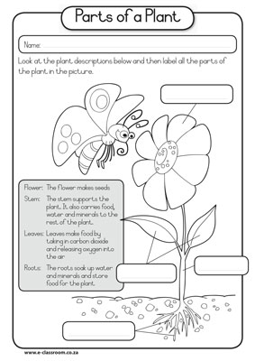 Kindergarten science learning outcomes thematic unit plan for Parts of a flower coloring page