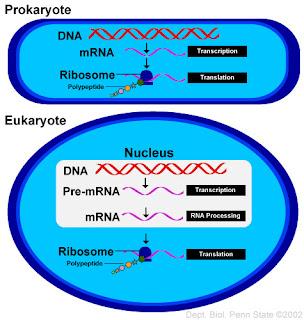 ap biology for dummies pdf