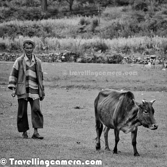 At Photo Journey, we have shared various places and events from Himachal Pradesh. Today this Photo Journey is going to introduce few interesting folks we met in this beautiful state of India..Himachal is one of the few Indian States which had remained largely untouched by external customs, largely due to its difficult terrains. With the technological advancements the state has changed very rapidly, although many of the good things are retained as they were.Above photograph shows a group of folks from Kullu, who are playing Himachali bands on folk-songs of this Himalayan State. It was wonderful evening with musical moments under star lit sky Many people in Himachal drive their income from sheep, goats, and other cattle. Here is a gentleman we met in Shimla region of Himachal Pradesh. In Himachal, there is a particular community known as 'Gaddi'. They keep moving from one place to other with hundreds of goats & sheeps during winters. During summers they move back to their land in high altitudes. Although above gentleman is not a Gaddi, but a villagers who had approximately 10 goats in the group.Most of the people in Himachal depend on agriculture for livelihood. Above lady was working in her vegetable farms for cutting cabbage for markets.We met this person at Gata-Kuffer village in Shimla region again and his cap was most interesting thing for us. On inquiring, we got to know that flowers on top of this cap was something that are natural, which look fresh most of the time unless we crush them. These flowers are found on one of the Himalayan treesI think more than ninety percent of the people live in villages and small towns of the state. Villages usually have terraced fields and small two storey houses with sloping roof. Most of the villages can be seen with houses having similar architecture, but now it's changing. The villages are mostly self-contained with a few shops to take care of basic necessities of life.A little girl coming back from fields with her lovely cattle walking on road side. This photograph was shot on highway which connects Shimla with Kinnaur.We were surprised to see this ! An old man coming back home with firewood weighing around 8 kgs on his back. Although he was quite comfortable because of habit of doing such activities during their daily activities. Although he looks worried in this photograph but happy face can be seen in the bottom of this Photo Journey. The Hindu communities residing in Himachal include the Brahmins, Rajputs, Kannets, Rathis and Kolis. There are also tribal population in the state which mainly comprise Gaddis, Kinnars, Gujjars, Pangawals and Lahaulis. In some areas, like Lahaul and Spiti, there is a majority of Buddhist population since the area is located near Tibet. A percentage of people are also Tibetans. Muslim, Christian and Sikhs are in minority but they also enjoy the same rights as HindusHere is a photograph of lady going towards Apple Orchards with a container on her back. This was not a season of plucking apples, so she was going to orchards for cutting grass under apple trees and bring back something to feed cattle at home. She was having this stick to guide her dog :Himachal Pradesh is a multireligional, multicultural as well as multilingual state like other Indian states. Some of the most commonly spoken languages includes Hindi, Punjabi, Pahari, Dogri, Mandeali, Kangri and Kinnauri... It's strange that folks from Himachal also fail to understand language spoken in other parts of the state. Event accent changes a lot within districtsThough hindi is the state language, many people speak Pahari also. Pahari laguage itself has many dialects and all of them trace their origin to the Sanskrit language- also known as origin of all languages. Punjabi touch can be heard in lower himachal region, which is near to Punjab.As per the traditional dressing norms the dress of the Brahmin male includes dhoti, kurta, coat, waistcoat, turban and a hand towel while that of the Rajput male consists of tight fitting churidar pyjamas, a long coat and a starched turban. With the changing time the dress up of the people has now become a mixed one. Though the above mentioned style is now hardly followed, people have started wearing western style of clothesDress shown in above photograph is known as Reshta, which can be seen in Kotkhai area of Shimla district. Similarly there are various dresses which can be seen in different parts of the stateAn interesting Himachali, Mr Rohit Sharma. I met him once in Shimla and in contact with him till date. An all rounder person with a BIG smile always on his face. He is mainly into Media and also have some businesses in Shimla. A creative mind who has also worked in many of the Bollywood moviesShe is Nirgala, who is not basically from Himachal but we have met her twice in Himalayas. She is a professional Cycle rider and has won various contests in multiple countries on this earth. A cheerful girl, who is extremely passionate about Cycling. Of course, while in Himachal, you can meet lot of adventure lovers all around...Most villages of Himachal Pradesh have a temple, where people come for worship. Himalayas are also a destination for Sadhus, for various reasons :) ... We met him in Sarahn Village while he was going towards Shrikhand Mahadev, which is a pilgrimage destination in Himachal Pradesh.Himachali people hard working and brave as well. Many of the folks from Himachal work for Indian Army and they are physically very strong because of their daily lifestyle. Most of the people in Himachal need to walk a lot for daily stuff like going to office, reaching market for grabbing general stuff for kitchen etc. Above photograph shows a man diving into the Shrikhand River near Nirmand/Baghi-pul.Two Himachali Folk Dancers, who are mainly into other profession. Dance is their passion and they have performed in various places in the state. Even someone needs to say for a performance and they can perform for you anywhere. Above photograph is shot during trek to Sarolsar Lake near Jalori Pass. It was time to rest for us and they were entertaining us :) ... btw, great dancers are Saurabh and Rohit !Himachal as a state always remain in top 5 states from literacy point of view. So it's obvious to see various schools en route. Above photograph is shot in one of the school, which shows two little girls cleaning their dishes after lunch. In Himachal, lunch is offered free for kids in school campus onlyThe typical house in Himachal Pradesh is constructed of clay bricks and the roofs are of slate. In some areas the slate roof is also replaced by timber. Above photograph shows a school-girl looking down from first floor of the school, which has most of the parts made up of wood.Himachal is popular destination for travellers, adventure lovers, trekkers etc. So here is one of the photographs showing a tourist capturing Himalayn Beauty in her Digital Camera.Of course, Cricket is one of the popular sport in Himachal as well. Kids can be seen playing Cricket, Gilli-Danda, Pithoo etc. But Cricket is becoming more popular with new generation. But most of the times bat is made at home.A majority of the population of Himachal Pradesh is engaged in agricultural practices, however the more educated of them are now moving towards tertiary sectors. A happy kid helping us in village tour at Sarahan. There is a smal village in Kullu, which is isolated from rest of the state and situated on a hill top. This village is equipped with solar street-lights and well connected with telephone lines. This place gets snow during most of the time in an year. Good part was to know about appropriate educational infrastructure in the village. There is a high school at this place.  In general people of Himachal Pradesh are honest, truthful, gentle, and good humored. The beauty of Himachal is enhanced by its inhabitants-mostly farmers- known for their charm, tolerance and honesty. Himachal Pradesh with its sturdy hill people is well-known for its centuries old costumes & other garmentsSome parts of Himachal grow apples and these orchards need lot of people to take care of these delicate trees. Many folks from Nepal come to Shimla and join various Orchards in upper Shimla, Kinnaur and Kullu regions. This photograph was shot in market of Narkanda, when this lady was waiting for local bus towards the apple orchard where she was workingHer companion keeping an eye of buses moving here and there...Priest at Hatu Temple near Narkanda, Shimla, Himachal Pradesh, India !!People from other states love to try local dresses. Here is a photograph of one of my friends, who wanted to try 'Dhattu'. Dhattu is cloth she has wrapped around her head. Himachali ladies use this to cover their heads to prevent from cold waves in himalayas.In Himachal there is a very different trend of having village-gods, usually called 'Devatas'. Especially in upper Himachal the village Gods are carried on palanquins to village fairs. On Dussehra the largest congregation of village Gods takes place at Kullu. The folk songs of Himachal Pradesh are full of charm. They are usually based on a religious or a romantic theme. People gather in a circle in village fairs and dance to the tune of these songsHimachali lady crossing a very thin bridge..Kids sorting corn-seeds in upper Himachal region of IndiaPotatoes of Himachal are very famous and some regions of the state export them to various countries. One of the big chips brands get potatoes on contract basis. Various villages in Kangra district produce potatoes for these big companies on pre-order basis. With this, our Photo Journey completes for now. This journey with more people from Himalayas will continue...
