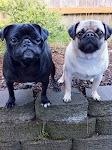 Otis & Black Pearl